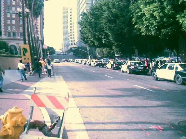 pigs on parade [anti...