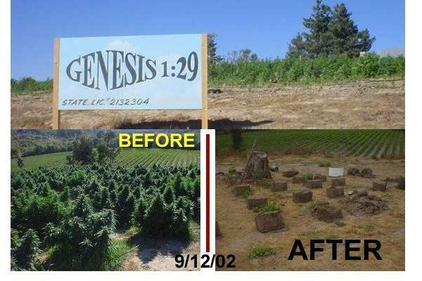 Genesis 1:29 B4 Afte...