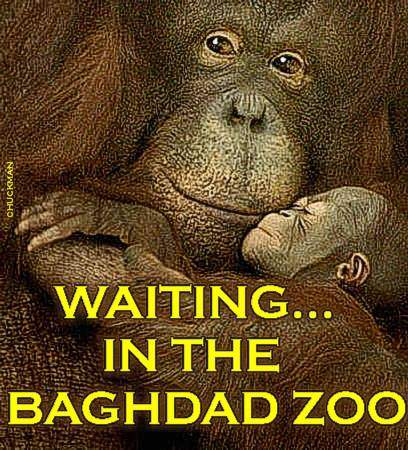 IN THE BAGHDAD ZOO...