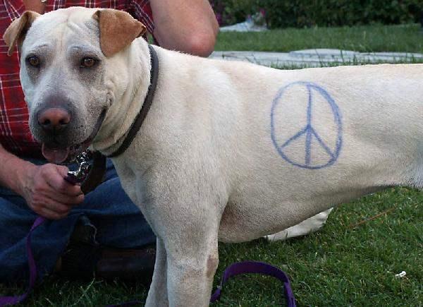 Peace Dog...
