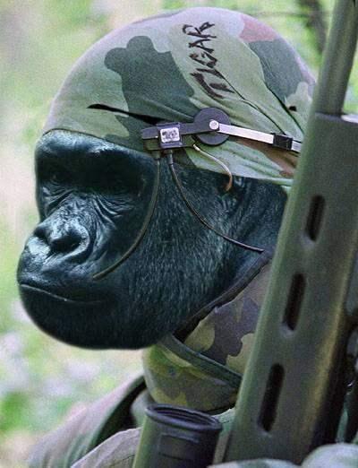 Photo Essay Of Troop...