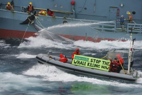 Japanese Whaling lau...