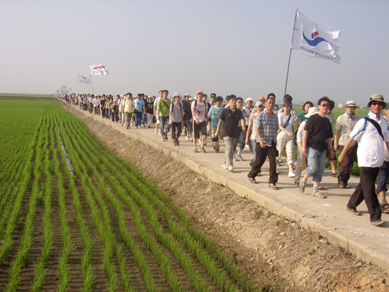 Into the rice fields...