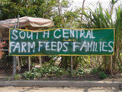 South central farmers displaced not defeated la imc - Industriel urban farm cuisine los angeles ca ...