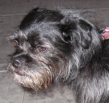 Ferd's dog Charlie...