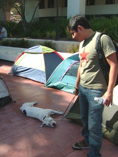 Camp Dog...