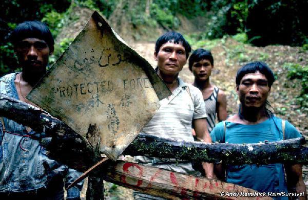 Borneo tribes: 30-y...