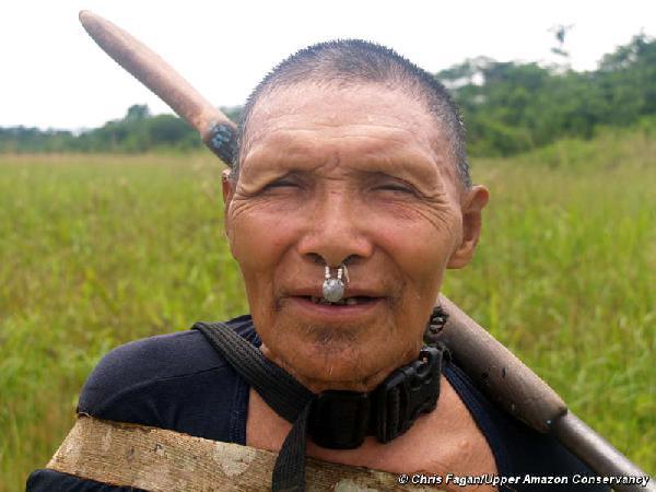 Peru admits timber c...