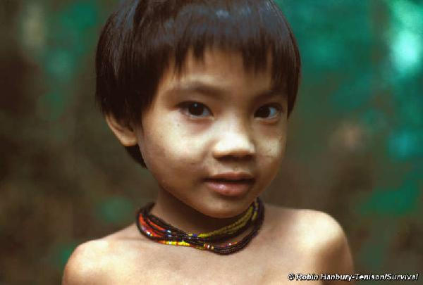 The Penan have lived...