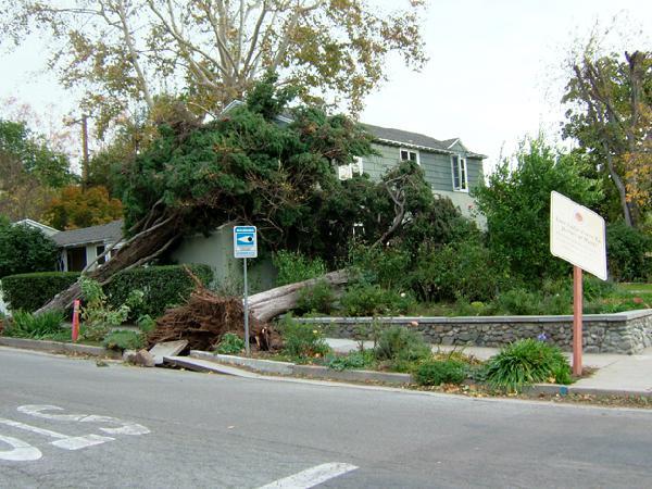 Fallen Trees on Hous...