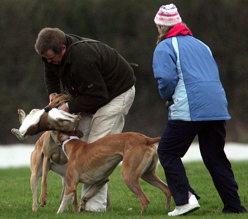 Two coursing fans wi...