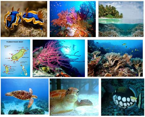 Tubbataha Reef...