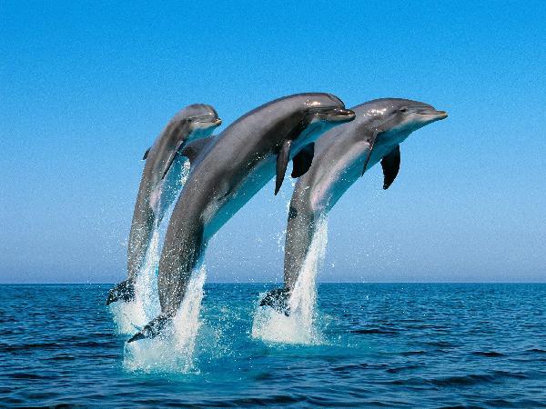 Many Reasons Dolphin...