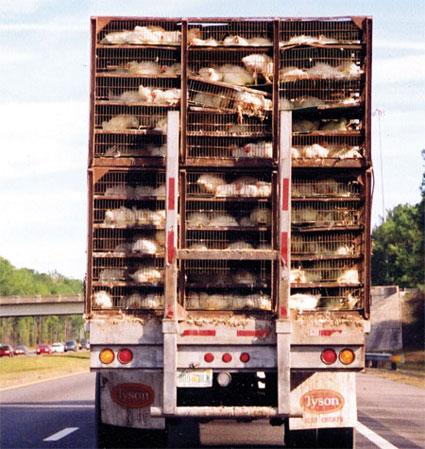 Chicken Disease And Boycott Cause Kfc Sales To Drop