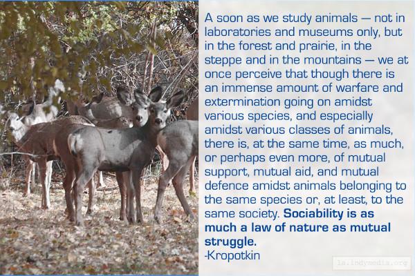 Animals Help Each Ot...