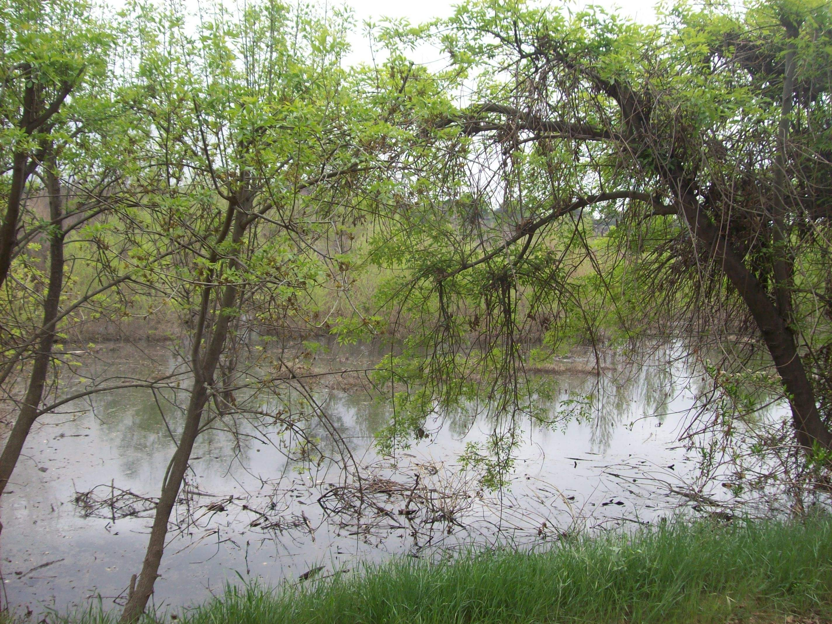 Hahamongna Watershed...