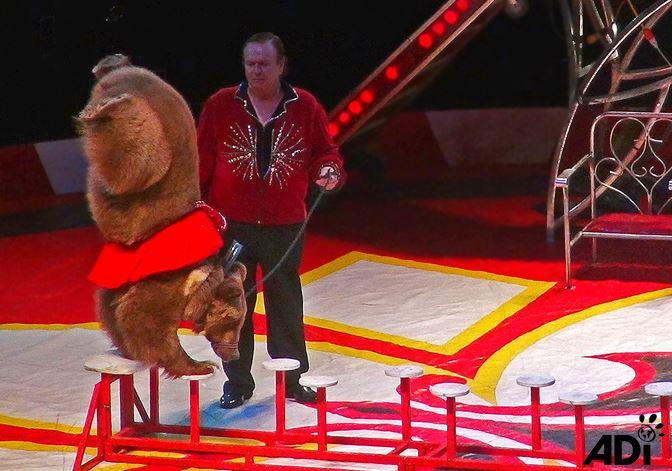 Stop Circus Animal S...