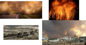 Animals Birds Burning Alive In Alberta Largest Evacuation In Canadian History
