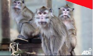 Cruel monkey farms on trial in Hendry County