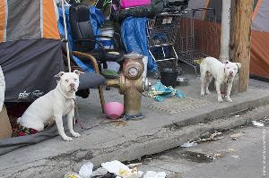 Front Yard with Two Dogs / Skid Row DTLA