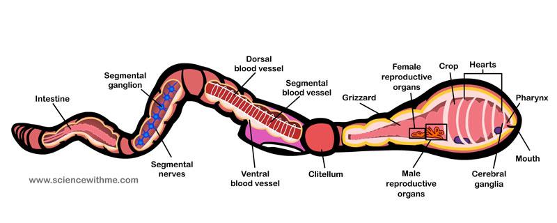 Diagram of a republi...